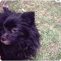 Adopt A Pet :: Gabbie - Chesapeake, VA