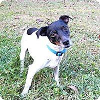 Adopt A Pet :: Cupcake - SWEET! - Mocksville, NC