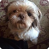 Adopt A Pet :: Mimi - Omaha, NE