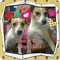 Adopt A Pet :: Dino & Enzo - Chicago, IL