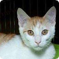 Adopt A Pet :: Nelson M - Sacramento, CA
