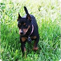 Adopt A Pet :: Presley - Topeka, KS