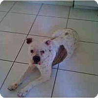 Adopt A Pet :: Lola - miami beach, FL
