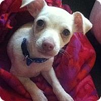 Adopt A Pet :: Leo - Long Beach, CA