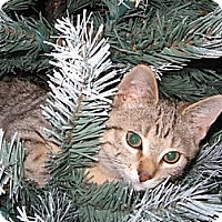 Adopt A Pet :: Jill - Norwich, NY