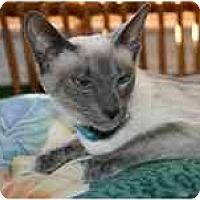 Adopt A Pet :: Geisha & Mischa - Arlington, VA