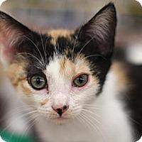 Adopt A Pet :: Greta - Sacramento, CA