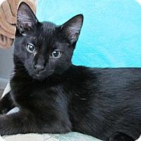 Adopt A Pet :: Boss - Seminole, FL