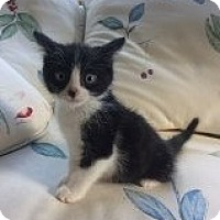 Adopt A Pet :: Peeps - Acme, PA