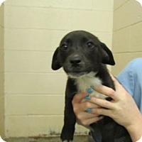 Adopt A Pet :: Sabrina - Millersville, MD