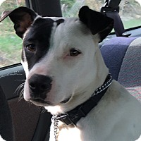 Adopt A Pet :: Ridge - Burnham, PA