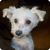 Adopt A Pet :: Bailey - Winder, GA