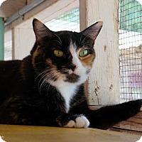 Adopt A Pet :: Io - Tucson, AZ
