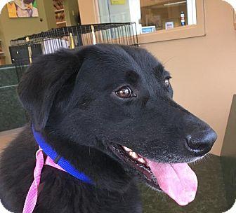 Labrador Retriever Mix Dog for adoption in LaGrange, Kentucky - Keenan