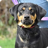 Adopt A Pet :: Gretchen - Lisbon, OH