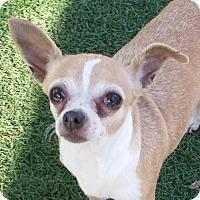 Adopt A Pet :: Jovi - Chula Vista, CA