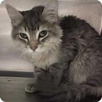 Adopt A Pet :: Merry - Denver, CO