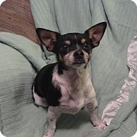 Adopt A Pet :: Zeus - Cokato, MN