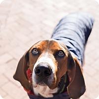 Adopt A Pet :: Tracker - Washington, DC