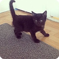 Adopt A Pet :: Greggory - Riverside, RI