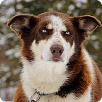 Adopt A Pet :: Dixie - Jefferson, NH