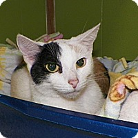 Adopt A Pet :: Lilac - Dover, OH