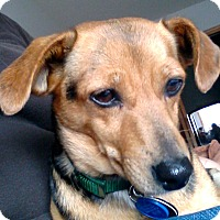 Adopt A Pet :: ZOEY - Minnetonka, MN