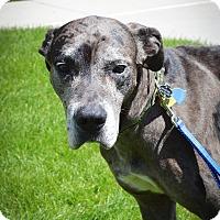 Adopt A Pet :: Newman - Broomfield, CO