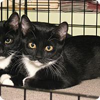 Adopt A Pet :: Ellie and Bert - Milford, MA