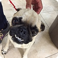 Adopt A Pet :: Panchito - Anaheim, CA
