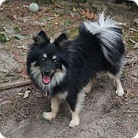 Adopt A Pet :: Diggle - conroe, TX