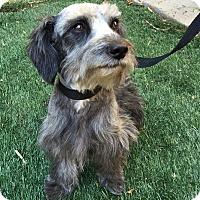 Adopt A Pet :: Dolton - Redondo Beach, CA