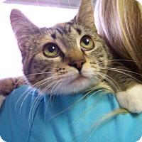 Adopt A Pet :: Kali - Toledo, OH