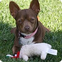 Adopt A Pet :: Ginny - Edmonton, AB