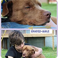 Adopt A Pet :: Spades - Harmony, Glocester, RI