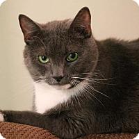 Adopt A Pet :: Boris_Courtesy Post - Columbia, MD
