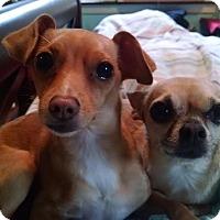 Adopt A Pet :: Milo and Lola - Pittsburgh, PA
