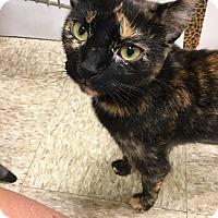 Adopt A Pet :: Jessie - Colmar, PA
