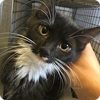 Adopt A Pet :: Peggy - Covington, KY