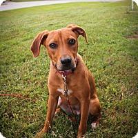 Adopt A Pet :: Kim - Grand Island, FL
