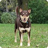 Adopt A Pet :: Ava - Atchison, KS
