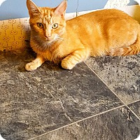 Adopt A Pet :: Butterscotch - Fairmont, WV