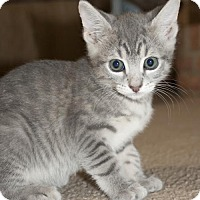 Adopt A Pet :: Stormy - Savannah, GA