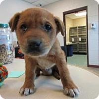 Adopt A Pet :: Brando - Irving, TX