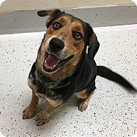 Adopt A Pet :: Penny - Burgaw, NC