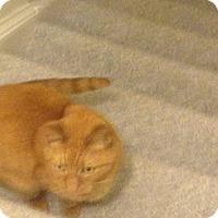 Adopt A Pet :: Frito - Stafford, VA