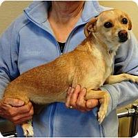 Adopt A Pet :: Cyndie - Nuevo, CA