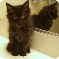 Adopt A Pet :: Chita - Irvine, CA