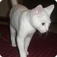 Adopt A Pet :: Taz - North Ogden, UT