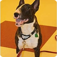Adopt A Pet :: Meatball - Columbia Station, OH